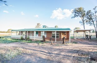 Picture of 2246 Newell Hwy, Gilgandra NSW 2827