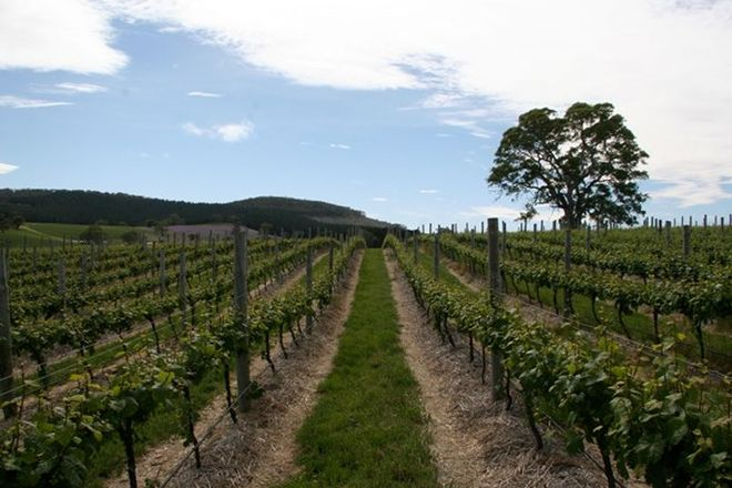 Picture of Domain Day Vineyard, Lot 349 Springton Road, WILLIAMSTOWN SA 5351