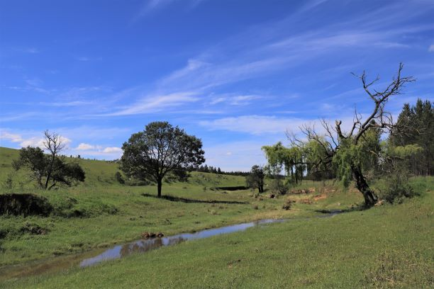 000 Corrowong Road, Corrowong NSW 2633, Image 0