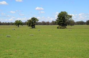 Picture of 'Glenburn' 1056 Kickabil Road, Gilgandra NSW 2827