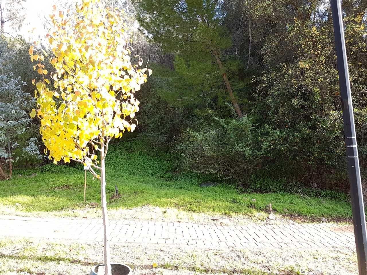 10 Duncan Road, Beaumont SA 5066, Image 2