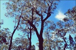 Picture of 0 Wattle Court, Millmerran Woods QLD 4357