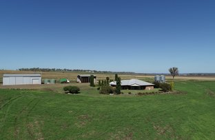 Picture of 491 Forest Springs Road, Spring Creek QLD 4361