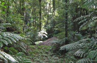 Picture of 1411 Kalang Road, Bellingen NSW 2454