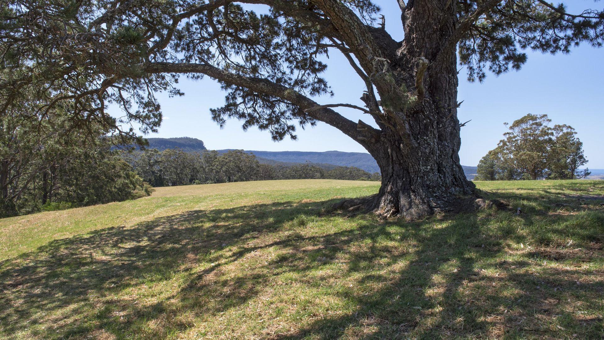 Berry Mountain NSW 2535, Image 2