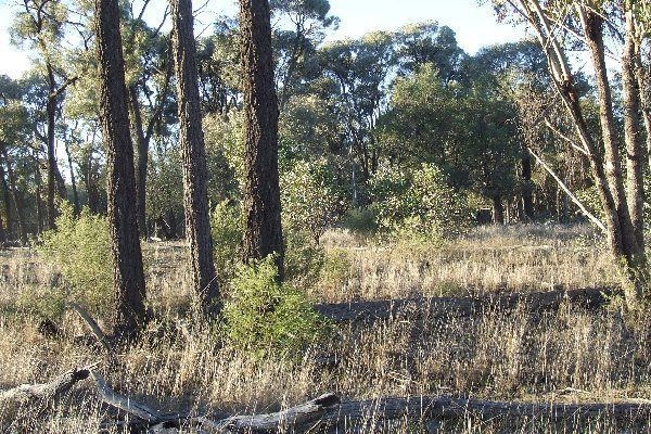 "1816 Acres ""Limestone"", Texas QLD 4385, Image 2"