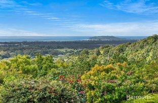 Picture of 1681 Hinterland  Way, Mcleods Shoot NSW 2479