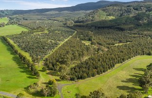 Picture of 910 King Parrot Creek Road, Strath Creek VIC 3658