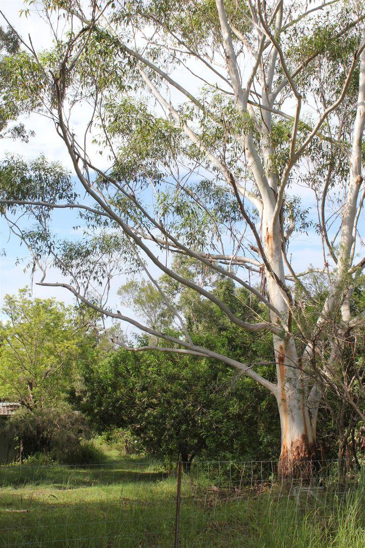 11 Lake Cooroibah Road, Cooroibah QLD 4565, Image 0