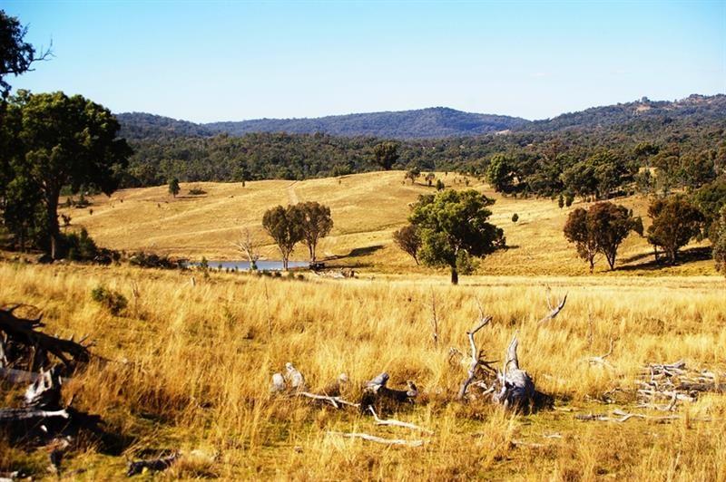 866 Wearnes Road, Bundarra NSW 2359, Image 1