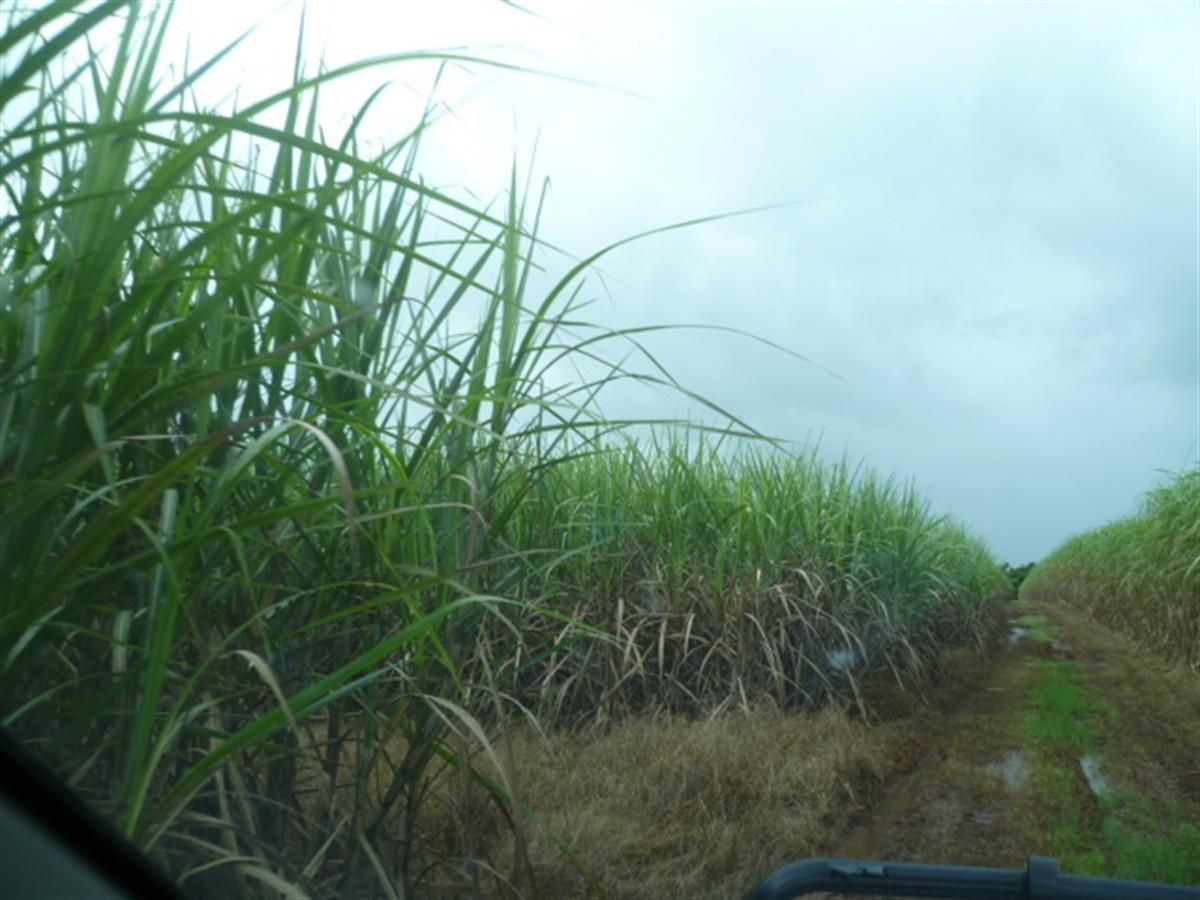 2098 Innisfail Japoon Road, Bombeeta QLD 4871, Image 1
