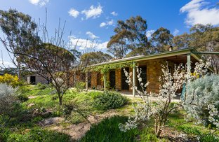 Picture of 181 Willy Milly Road, Muckleford VIC 3451
