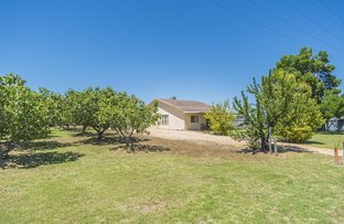 1226 Karadoc Avenue, Irymple VIC 3498