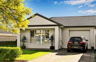 Picture of 37 Fife Avenue, Torrens Park SA 5062
