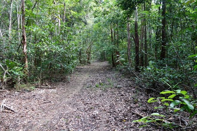 Picture of Lot 88 Rossville Bloomfield Road, BLOOMFIELD QLD 4895