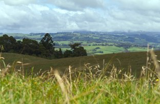 Picture of Dorrigo NSW 2453