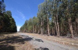 Picture of Raglan-Elmhurst Road, Glenlogie VIC 3469