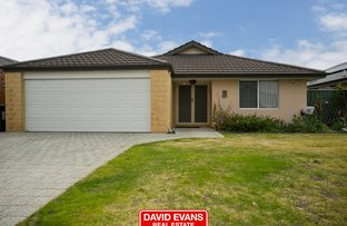 49 Teasel Way, Banksia Grove WA 6031