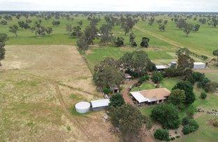 Picture of 828 Mundarra Estate Road, Edenhope VIC 3318