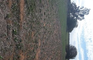 Picture of Lot 3 & 12 National Park Rd, Curban NSW 2827