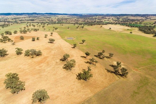 Picture of 1487 Packham Drive, MOLONG NSW 2866