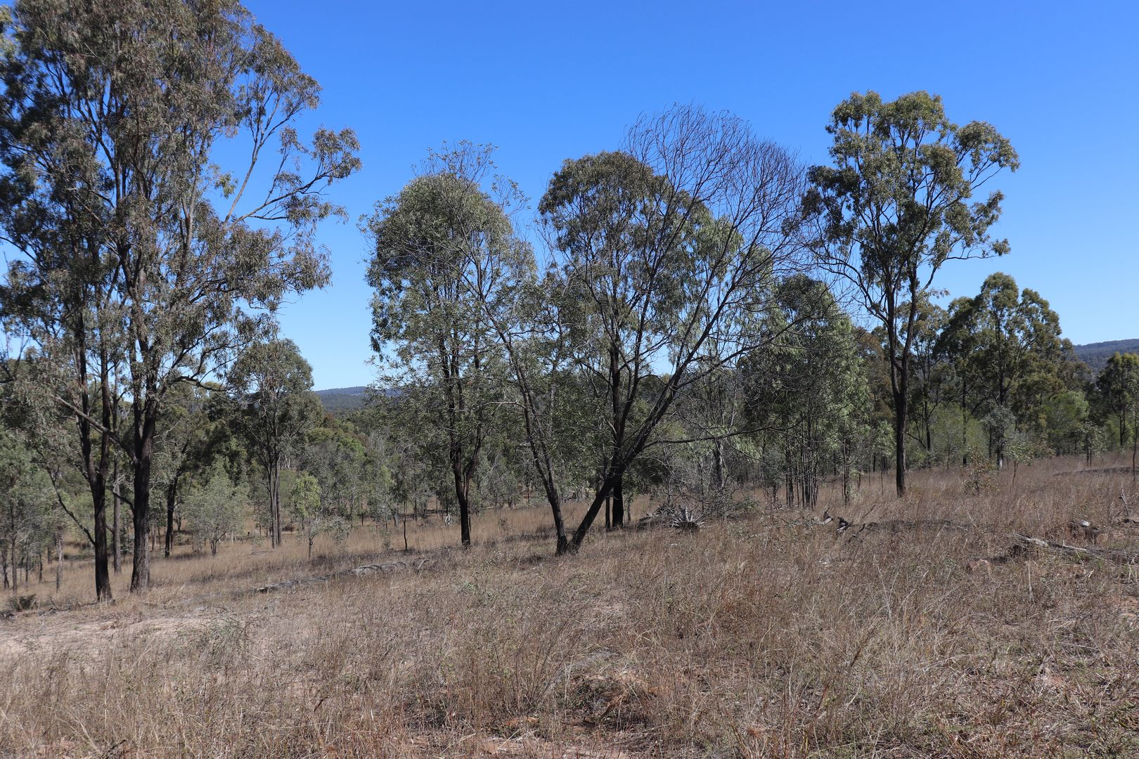 Lot 87 Youlambie Road, Monto QLD 4630, Image 1
