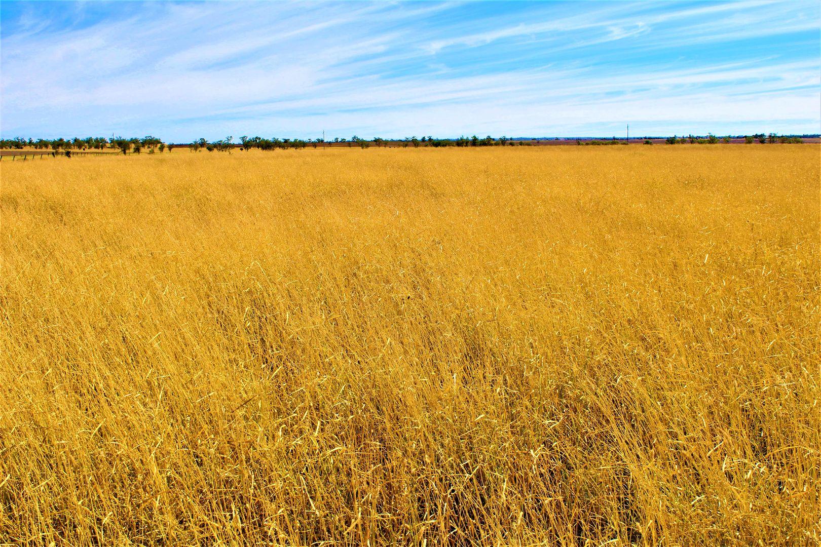 0 Plain Farm, Roma QLD 4455, Image 1