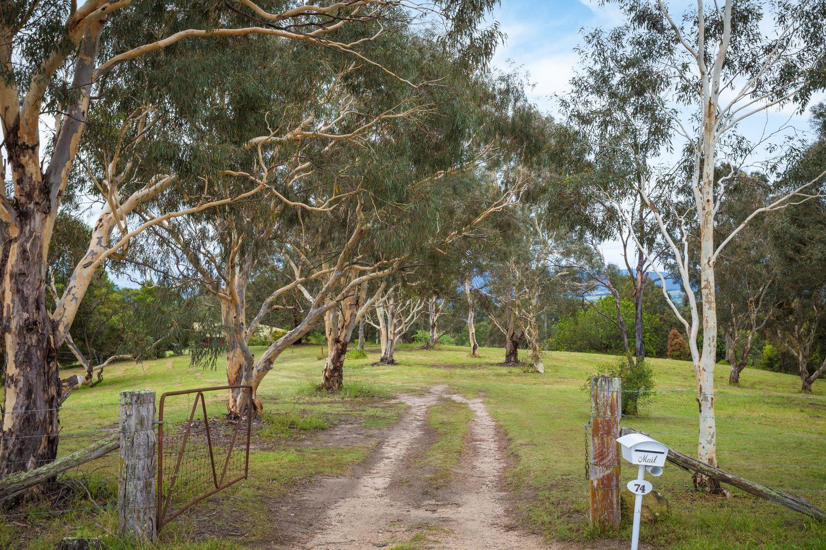 74 Finucanes Lane, Bega NSW 2550, Image 0