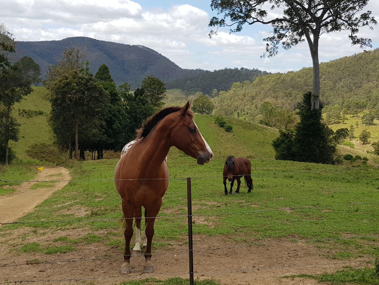 359 Tilbaroo Crossing Road, Toms Creek NSW 2446, Image 0