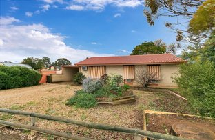 Picture of 2 Mulga Street, Gawler West SA 5118