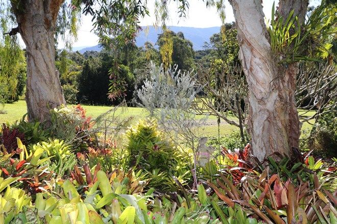 Picture of 97 Anderson Road, NIMBIN NSW 2480