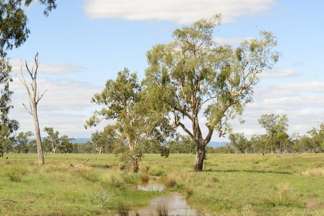 Picture of 404 ACRES, PRIME CATTLE & HORSE COUNTRY, JIMBOUR EAST QLD 4406