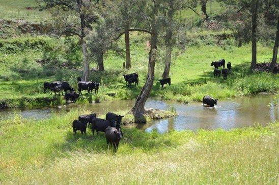 Picture of 'Glenco Park' 27 Weabonga Road, TAMWORTH NSW 2340