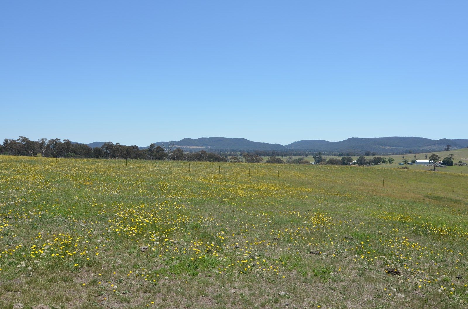 Lot 8 Back Cullen Road, Portland NSW 2847, Image 1