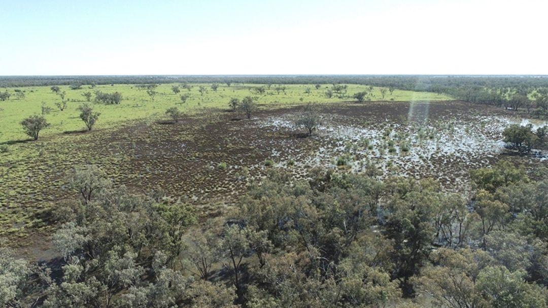 Bullock Paddock, Moree NSW 2400, Image 0