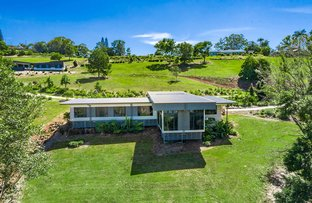 Picture of 14 Black Myrtle Court, Terranora NSW 2486