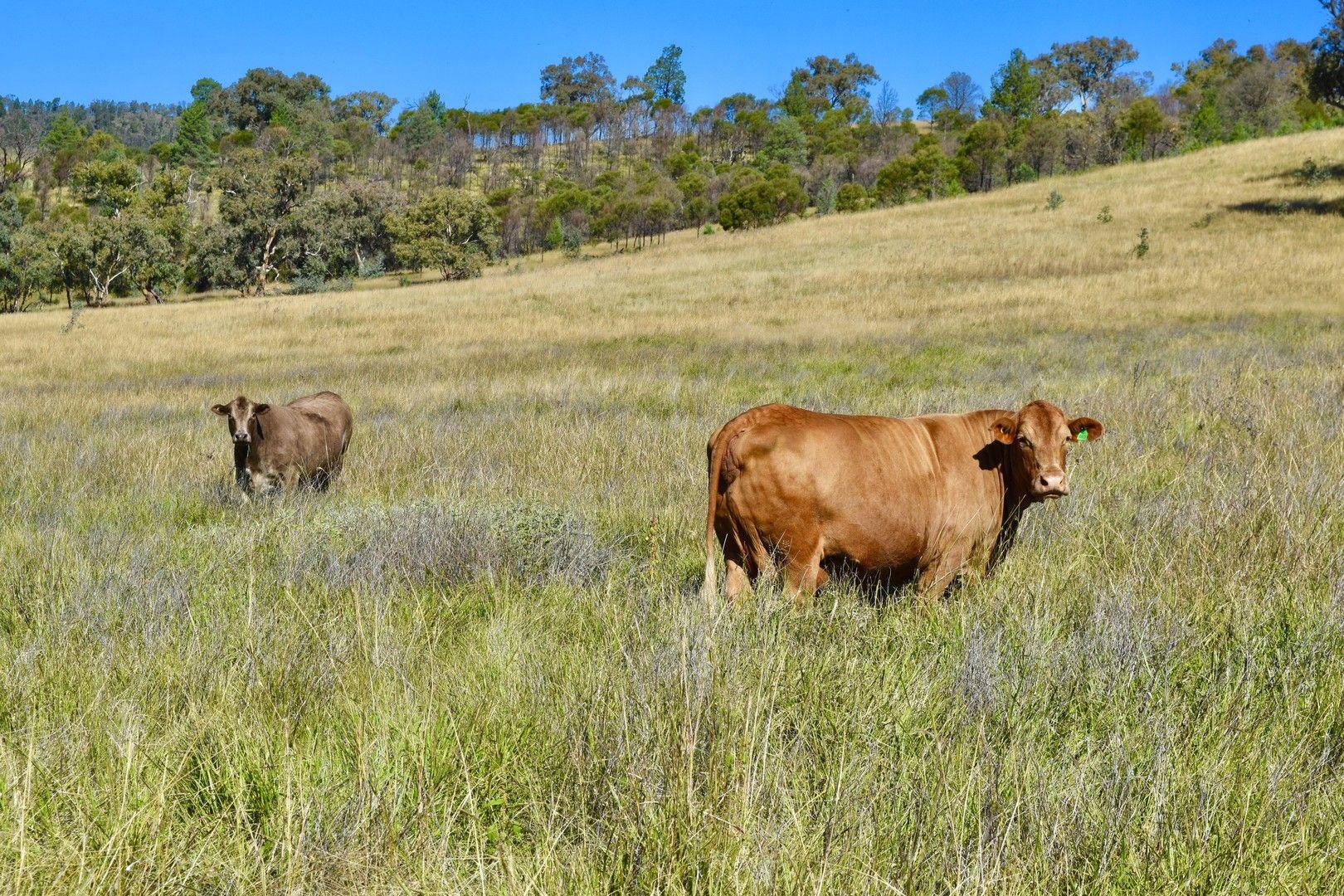 794 Reedy Creek Road 'Oaklands', Mandagery NSW 2870, Image 0