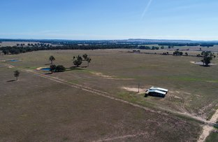 Picture of Stubbo Road, Gulgong NSW 2852