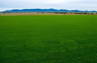 Picture of 1299 Brewer Lane, Lake Cargelligo NSW 2672