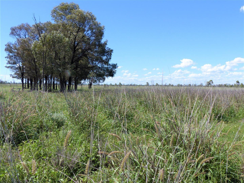 . Yamboyna, Wallumbilla QLD 4428, Image 0