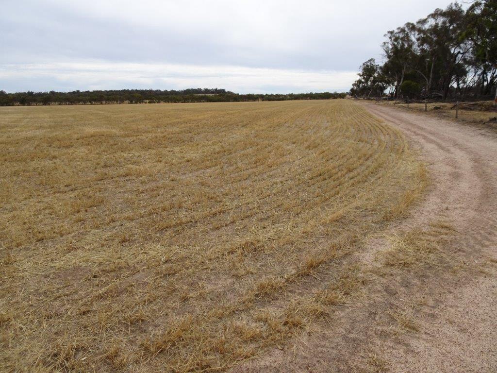 Lot 650 Yillimining Road, Narrogin Valley WA 6312, Image 0