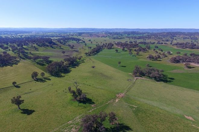 Picture of TARCUTTA NSW 2652