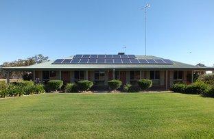 3147 Merrengreen Road, West Wyalong NSW 2671