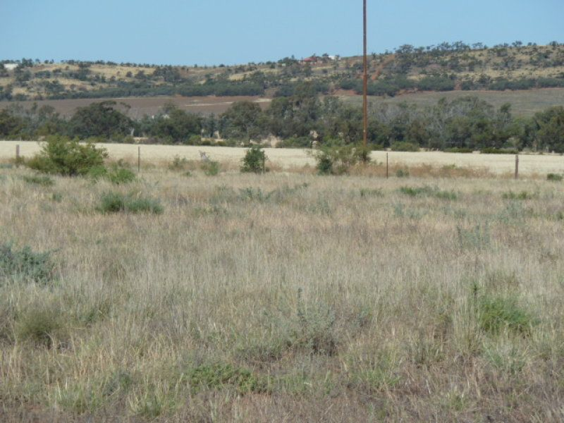 Cnr McConville &Armstrong Road , Quorn SA 5433, Image 1