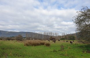 Picture of 187A Wilmot Road, Ranelagh TAS 7109