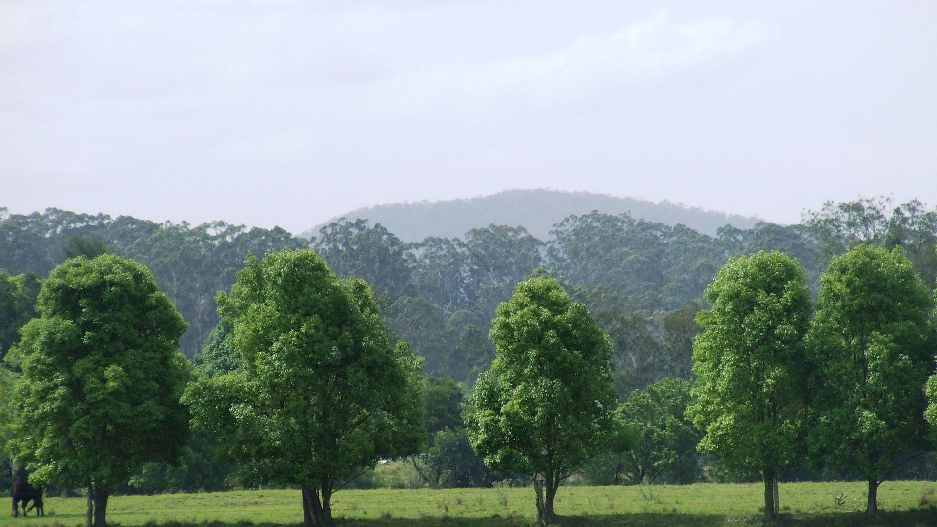 Rawdon Island NSW 2446, Image 2