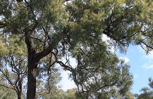 122 Bruxner Way, Tenterfield NSW 2372