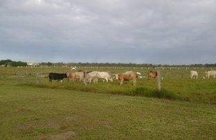 Picture of 136 Tarrants Road, Calavos QLD 4670
