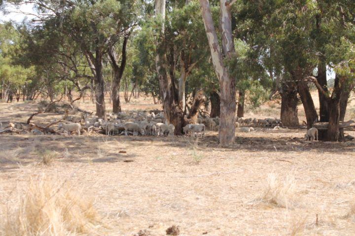 'Myola', West Wyalong NSW 2671, Image 1