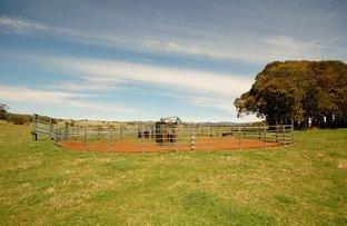 Dorrigo NSW 2453